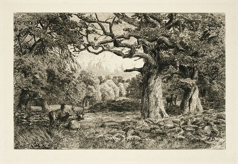 Fleay's_Etching_of_the_Forest_of_Arden